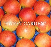 Наиболее хорошие яблоки из Польши - большой опт !!!
