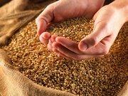 Продается фуражное зерно.