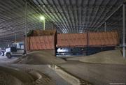 Реализация зерна по Казахстану,  Узбекистану,  России. Фурами,  ЖД трансп